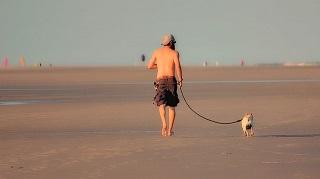 dog beach resized.jpg
