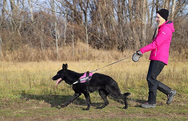 black-german-shepherd-4746991_640.jpg